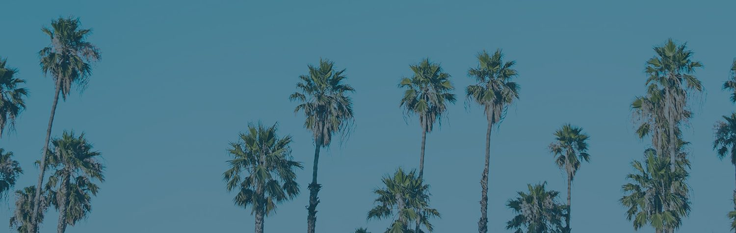 Many tall palm trees with a clear blue sky